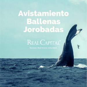 AVISTAMIENTO BALLENAS JOROBADAS